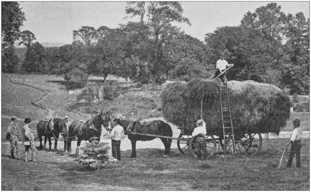 Antique photo: Hay harvesting Antique photo: Hay harvesting 1900 stock pictures, royalty-free photos & images