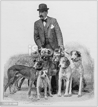 Antique photo: Man with dogs