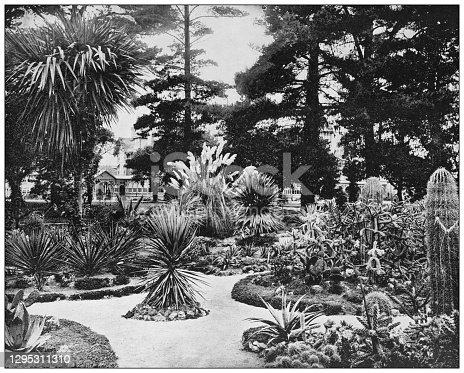 Antique photograph: Arizona Garden, Monterey, California