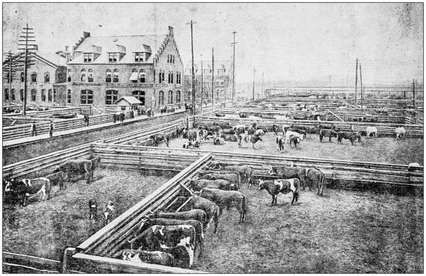 Antique photograph: Chicago Stock Yards Antique photograph: Chicago Stock Yards 1890 stock pictures, royalty-free photos & images