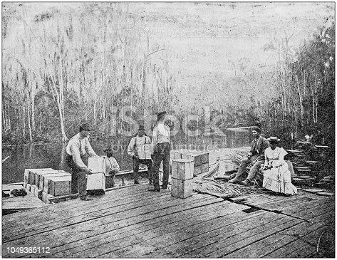 Antique photograph: Loading oranges on the Ocklawaha, Florida, USA