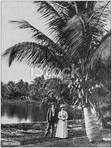 Antique photograph of America's famous landscapes: Coconut grove, Lake Worth, Florida