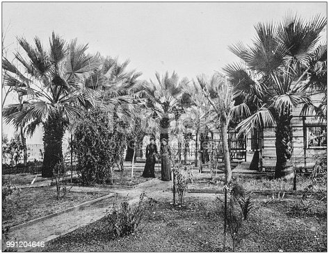 Antique photograph of America's famous landscapes: Garden of Palms, Indio, San Diego, California