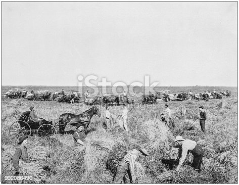 Antique photograph of America's famous landscapes: Harvesting in Dakota