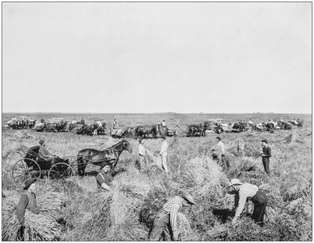 Antique photograph of America's famous landscapes: Harvesting in Dakota Antique photograph of America's famous landscapes: Harvesting in Dakota 20th century history stock pictures, royalty-free photos & images