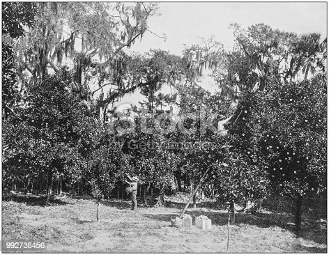 Antique photograph of America's famous landscapes: Orange Grove, Rockledge, Indian River, Florida