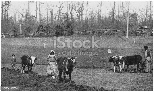 Antique photograph of America's famous landscapes: Rural Life, North Carolina