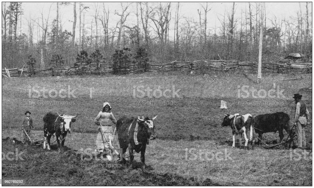 Antique photograph of America's famous landscapes: Rural Life, North Carolina stock photo