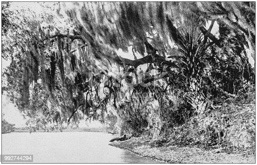 Antique photograph of America's famous landscapes: Suwannee River