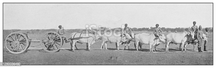Antique photograph of British Navy and Army: Bullock cart in India