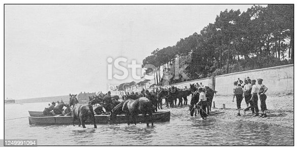 Antique photograph of British Navy and Army: Equine swimming lesson