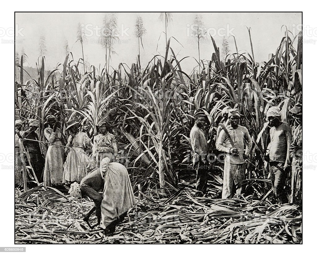Antique photograph of Cane cutters in Jamaica stock photo