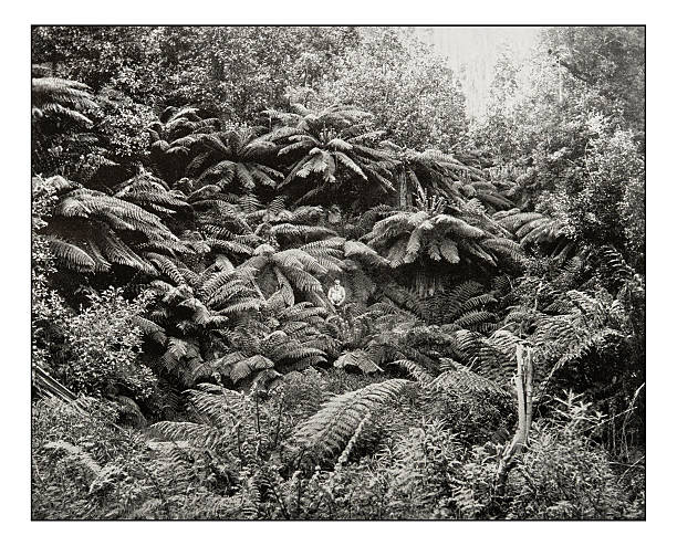 antique photograph of fern-tree valley under mount wellington - neuseeland kunst stock-fotos und bilder