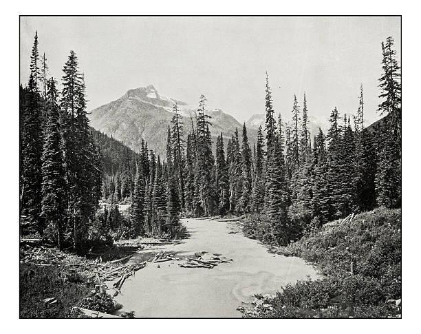 antique photograph of illecillewaet river - waldmalerei stock-fotos und bilder