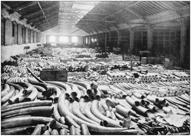 Antique photograph of London: Docks - Ivory warehouse Antique photograph of London: Docks - Ivory warehouse tusk stock pictures, royalty-free photos & images