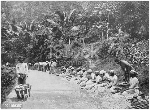 Antique photograph of the British Empire: People working in Jamaica