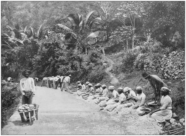 Antique photograph of the British Empire: People working in Jamaica stock photo