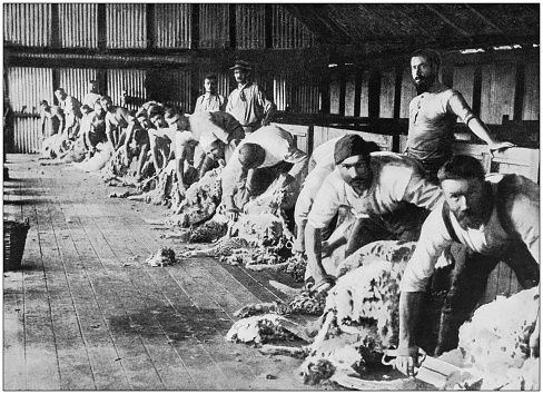 Antique photograph of the British Empire: Wool production in Australia
