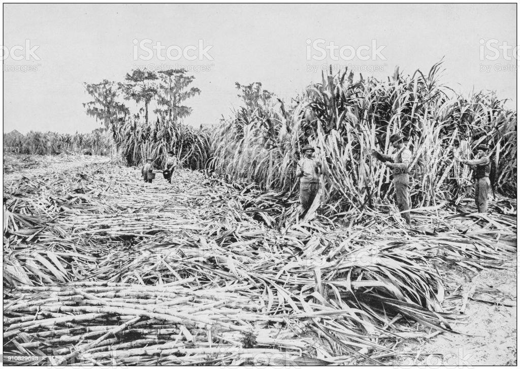 Antique photograph of World's famous sites: Sugar Plantation, Florida stock photo