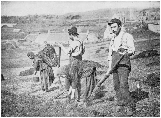 Antique photograph: Planting Potatoes in Skye Antique photograph: Planting Potatoes in Skye 1900 stock pictures, royalty-free photos & images