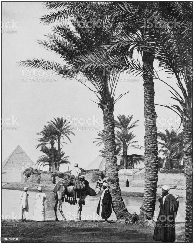 Antique photographs of Holy Land, Egypt and Middle East: Palm trees and Pyramids stock photo
