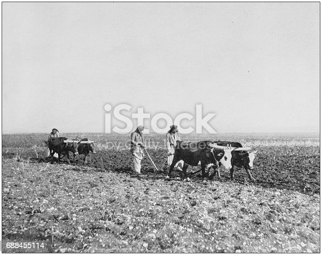 Antique photographs of Holy Land, Egypt and Middle East: Ploughing in Jezreel
