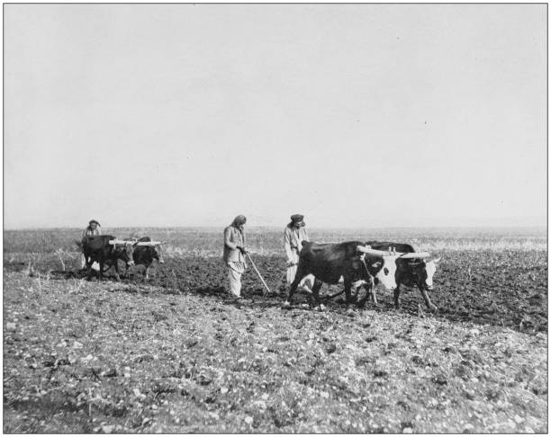 Antique photographs of Holy Land, Egypt and Middle East: Ploughing in Jezreel Antique photographs of Holy Land, Egypt and Middle East: Ploughing in Jezreel 20th century history stock pictures, royalty-free photos & images