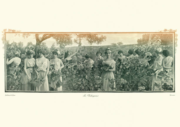 Antique photomontage photograph, Young women harvesting grapes, Victorian stock photo