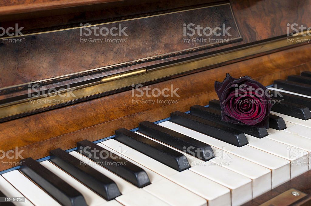 Antique piano with red rose royalty-free stock photo