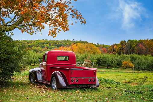 Old antique red farm truck in apple orchard against autumn landscape background. Blue sky on a sunny fall day in New England.