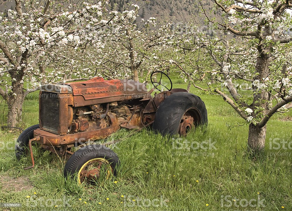 Antique tractor in a blossomed orchard royalty-free stock photo