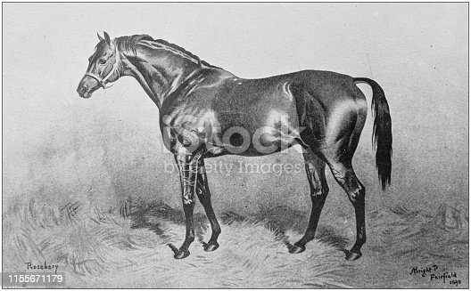 Antique vintage black and white photo: Racing horse