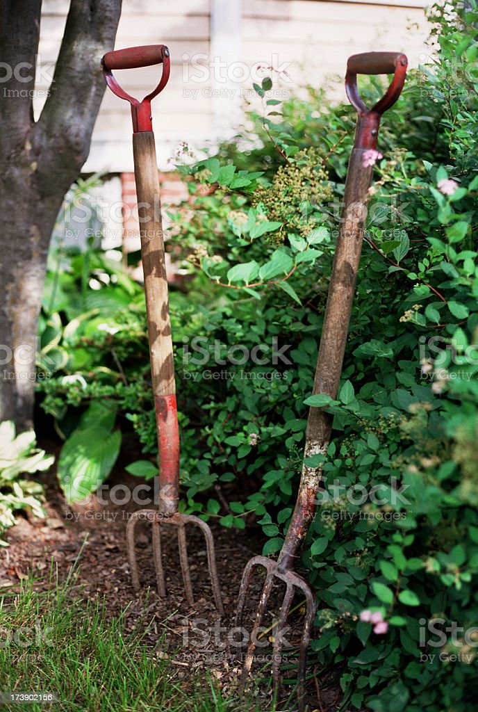 Antique Wooden Pitchforks Stuck in the Ground royalty-free stock photo