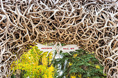 Stock photograph of one of the Antler arches in downtown Jackson, Wyoming, USA.