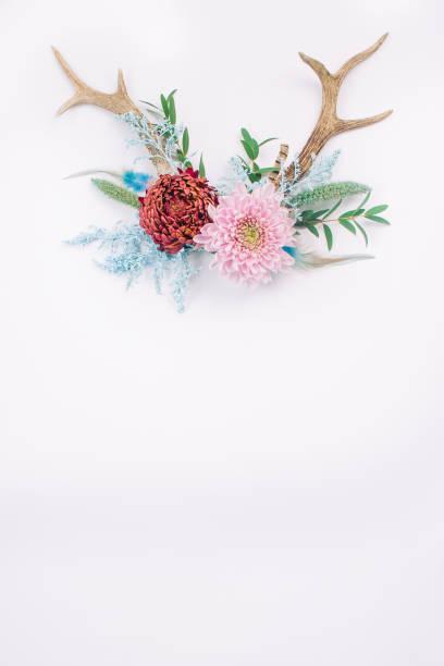 geweih, dekoriert mit blumen auf weißem hintergrund - jagd kranz stock-fotos und bilder
