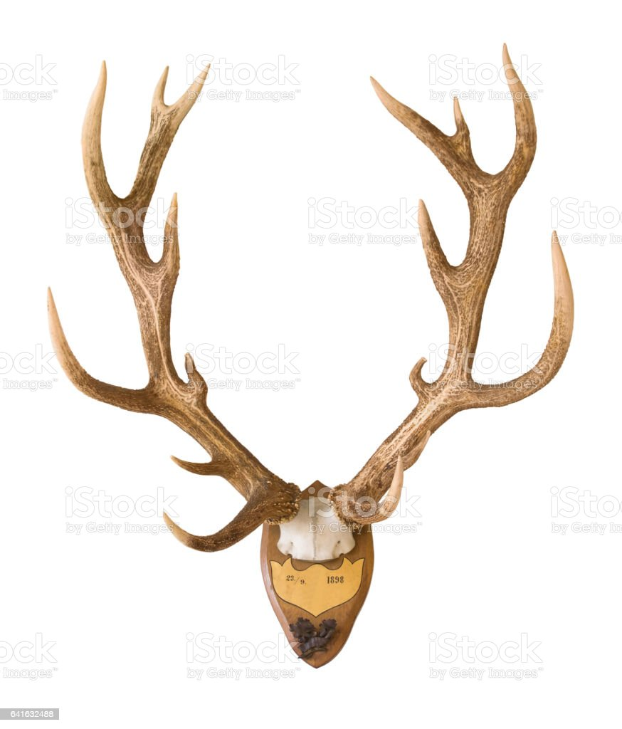 Antlers from a huge stag mounted on wood board stock photo