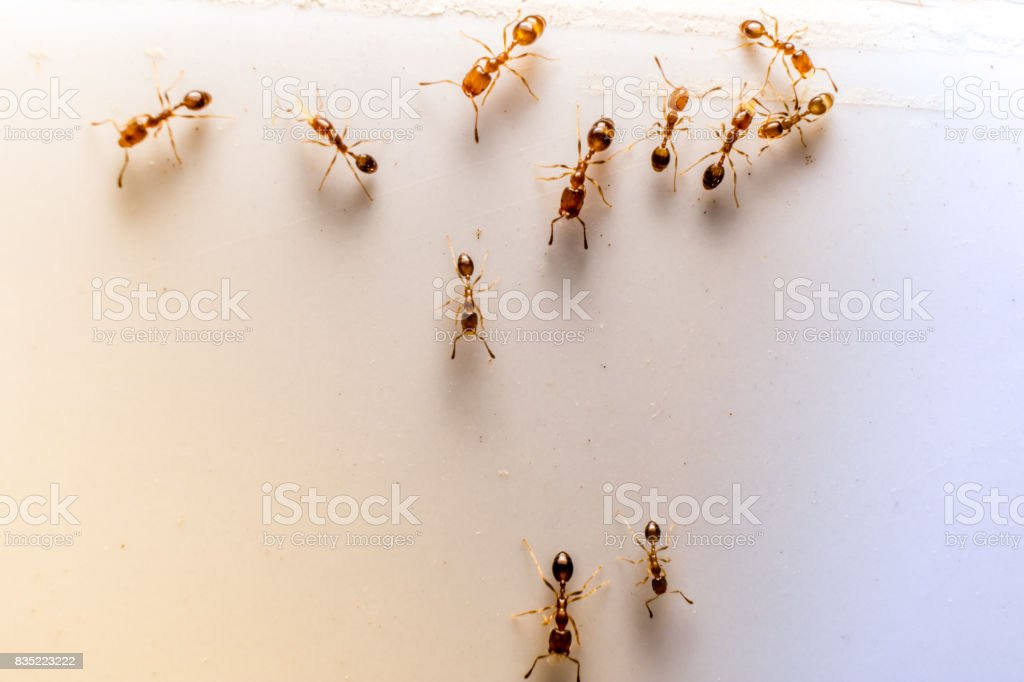 Ants and Ant stock photo
