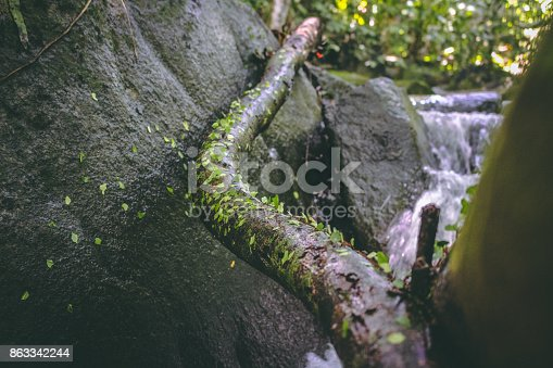485413653istockphoto Ants at river 863342244