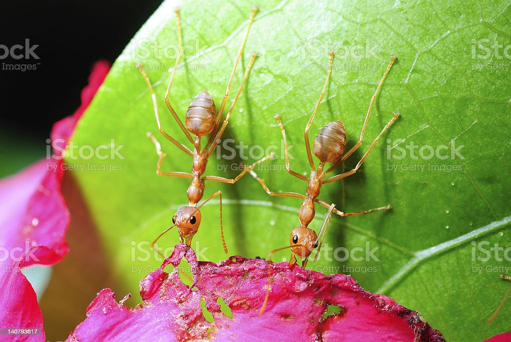 Ants at work stock photo
