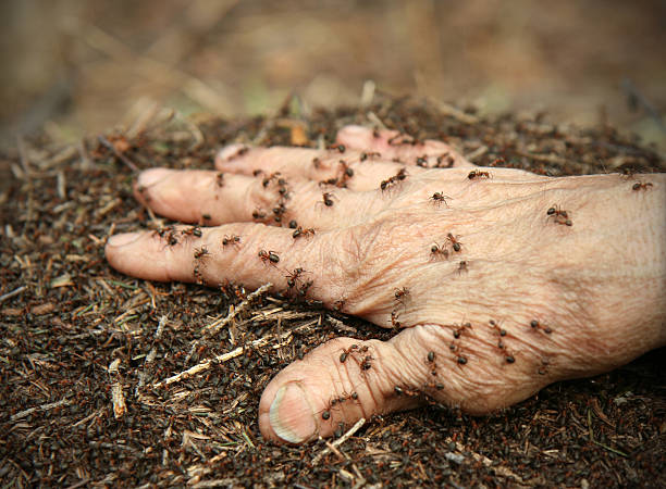 ants attack lots of ants on an old man's hand formic acid stock pictures, royalty-free photos & images