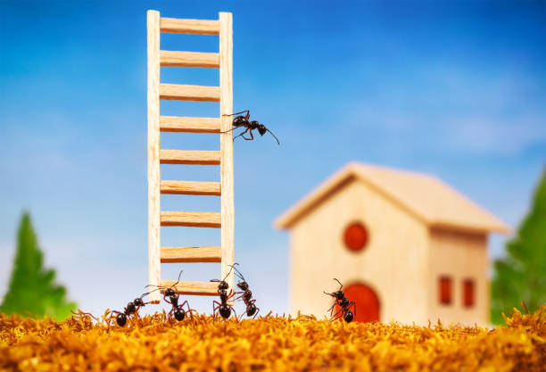 ants build a house with ladder, teamwork concept - ants working together stock photos and pictures