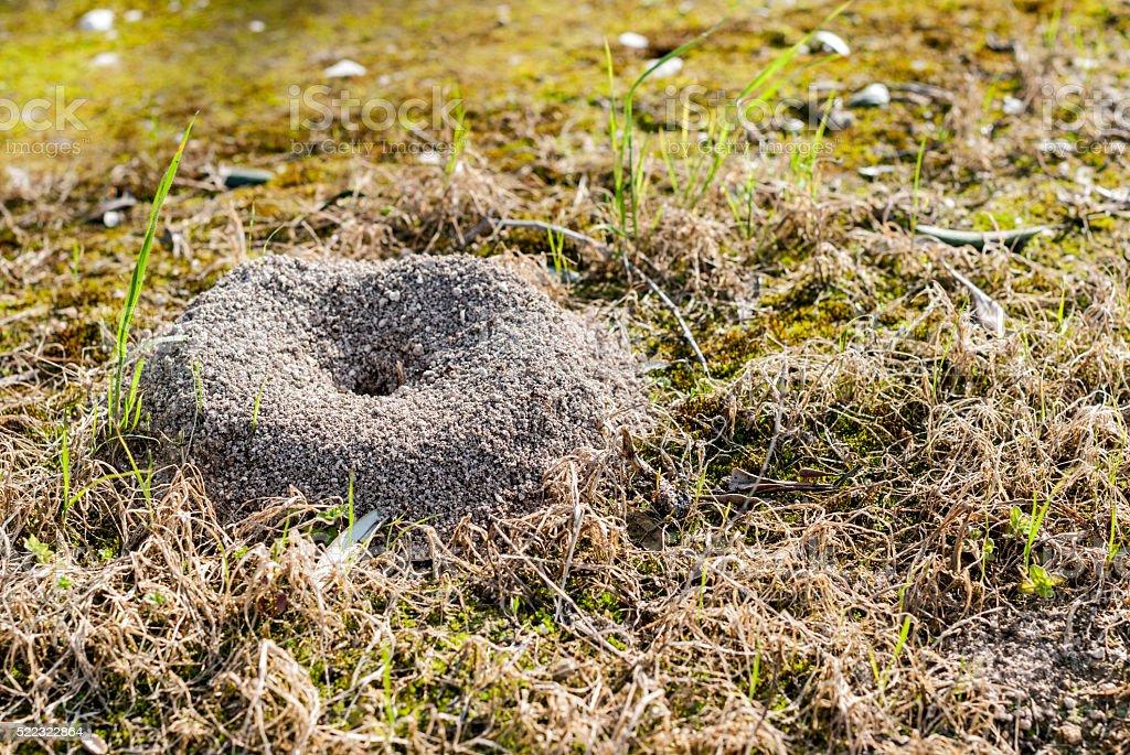 Ants burrow in a farmland stock photo