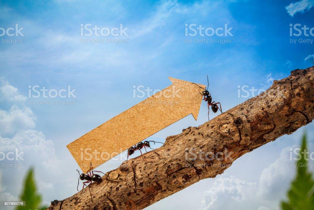Ameisen tragen steigende Pfeil für Grafik, Geschäft und Teamwork Geschäftskonzept – Foto
