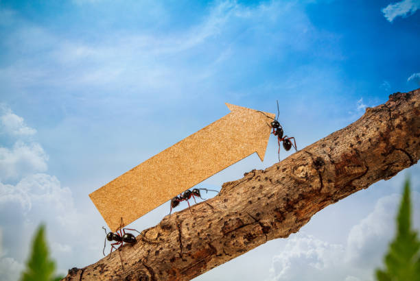 ants carry rising arrow for business graph, business and teamwork concept - ants working together stock photos and pictures
