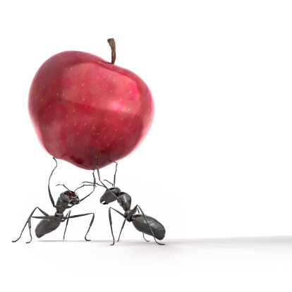 Ants carrying an apple against a white background. Very high resolution 3D render.