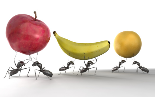 Six ants carrying an apple, banana and orange against a white background. Very high resolution 3D render.