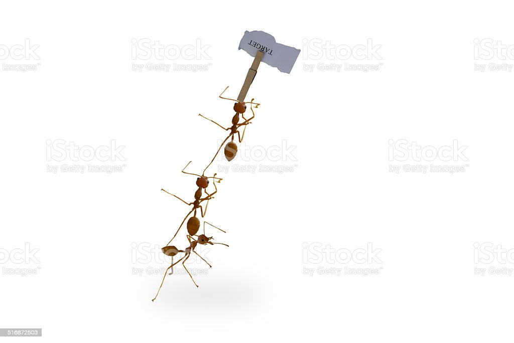ants carrying stock photo