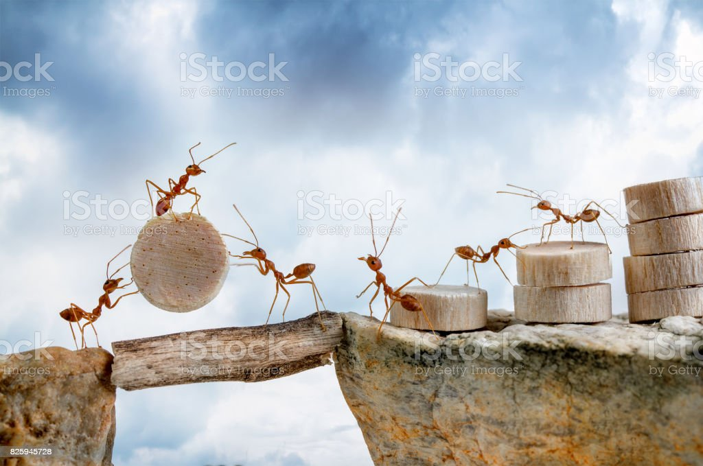 Ants carrying wood crossing cliff, teamwork concept stock photo