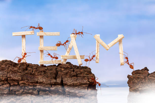 ants carrying wording team, teamwork concept - ants working together stock photos and pictures