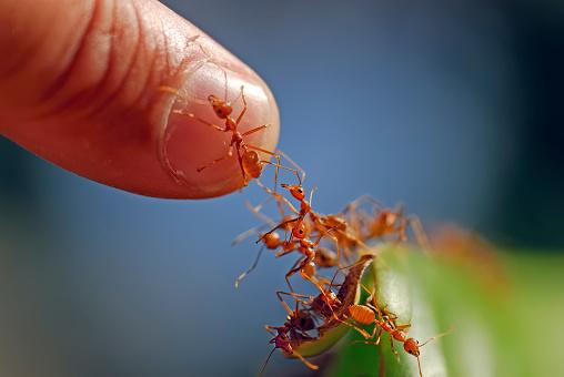 ants climb to a human finger